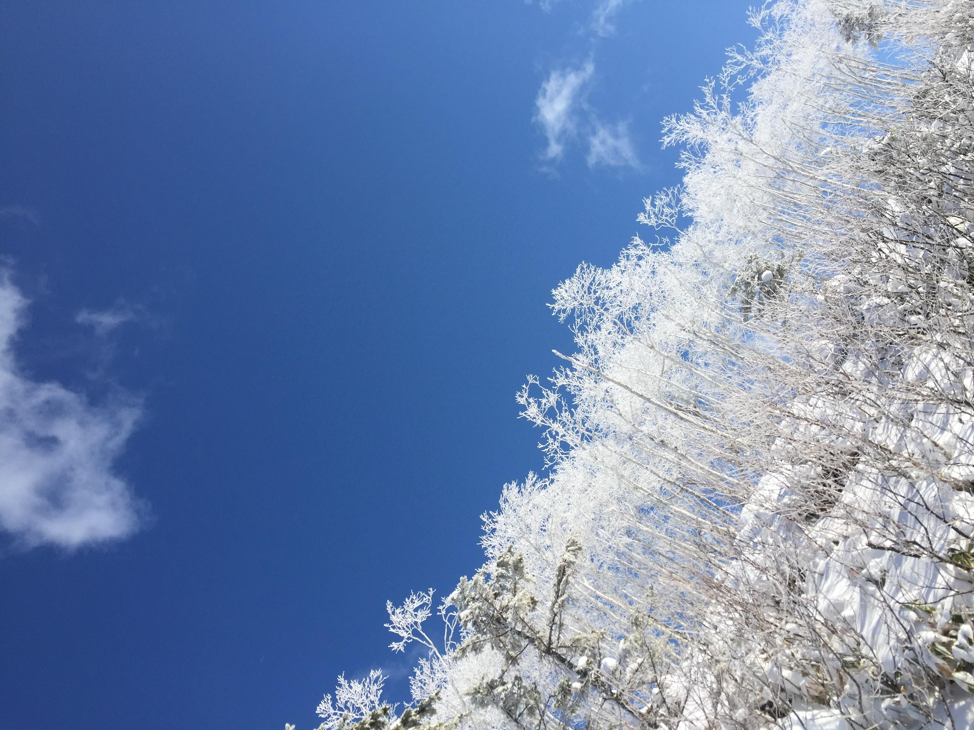 知床の樹氷